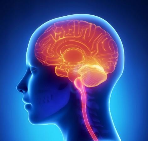 Jaką funkcję spełnia mózg gadzi?